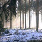 Wald Baum Winter